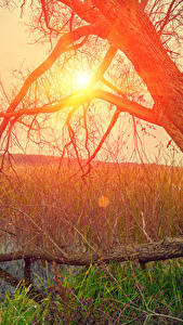 Wallpapers Sunrises and sunsets Trunk tree Swamp Grass Sun