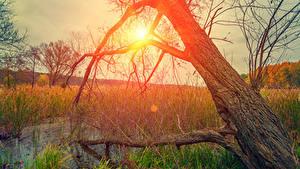 Bilder Morgendämmerung und Sonnenuntergang Baumstamm Sumpf Gras Sonne