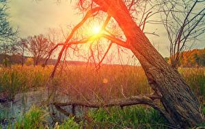 Bilder Sonnenaufgänge und Sonnenuntergänge Baumstamm Sumpf Gras Sonne Natur