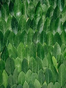 Hintergrundbilder Textur Blattwerk Grün Leaves Natur