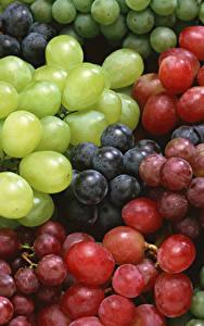 Bilder Weintraube Nahaufnahme Viel das Essen