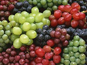Bilder Weintraube Großansicht Viel