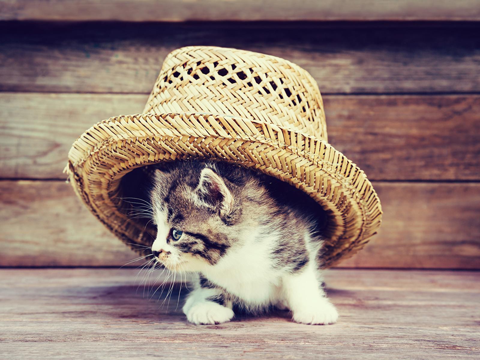 Обои шляпка, Кошка, кот. Кошки foto 8