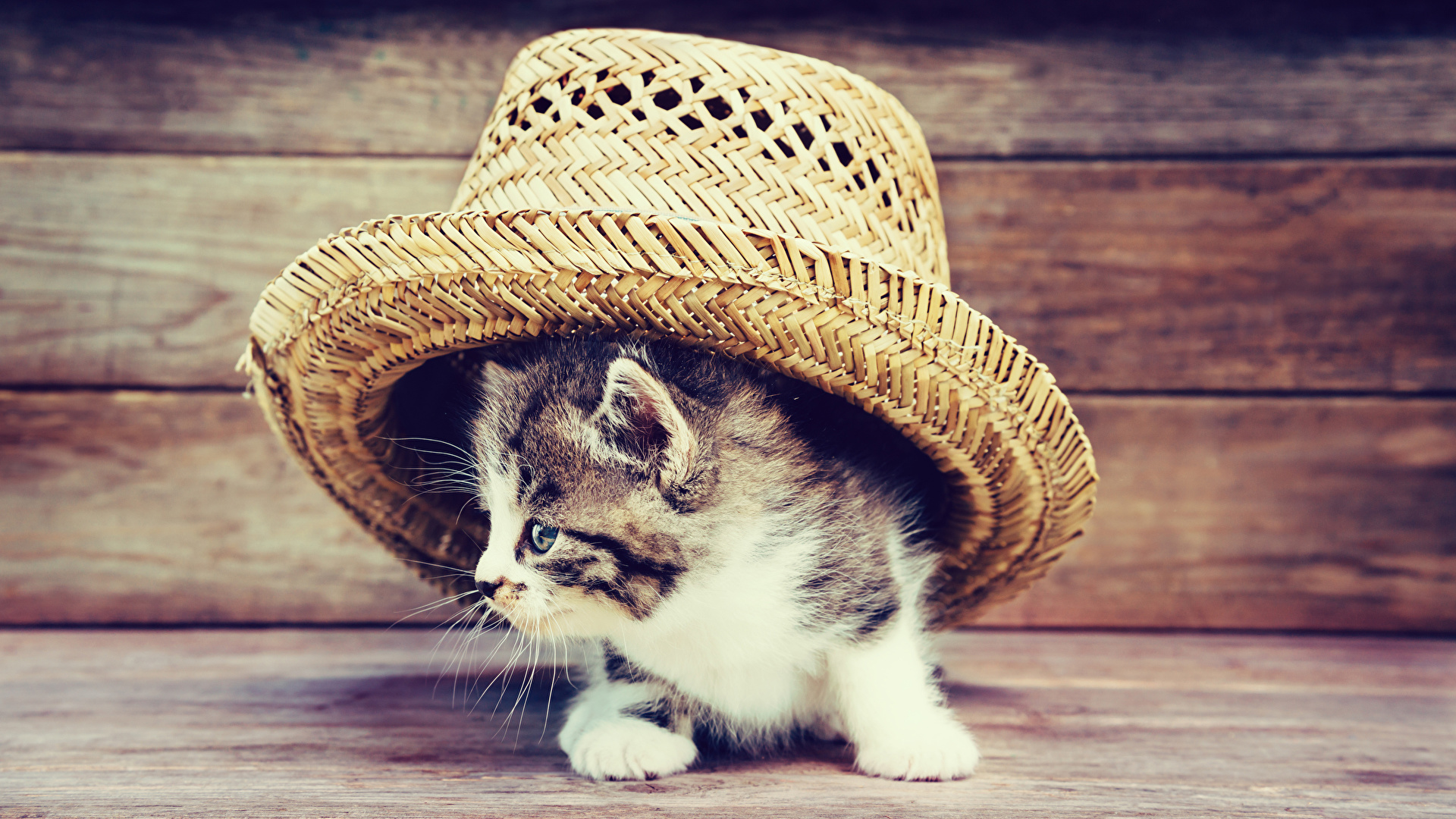 Desktop Wallpapers Kitty Cat Cat Hat Animal Wood Planks 1920x1080