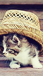 Hintergrundbilder Hauskatze Bretter Katzenjunges Der Hut