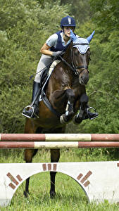 Bilder Hauspferd Pferdesport Sprung Sport Mädchens