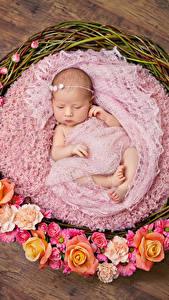 Bilder Rosen Weidenkorb Baby Kinder