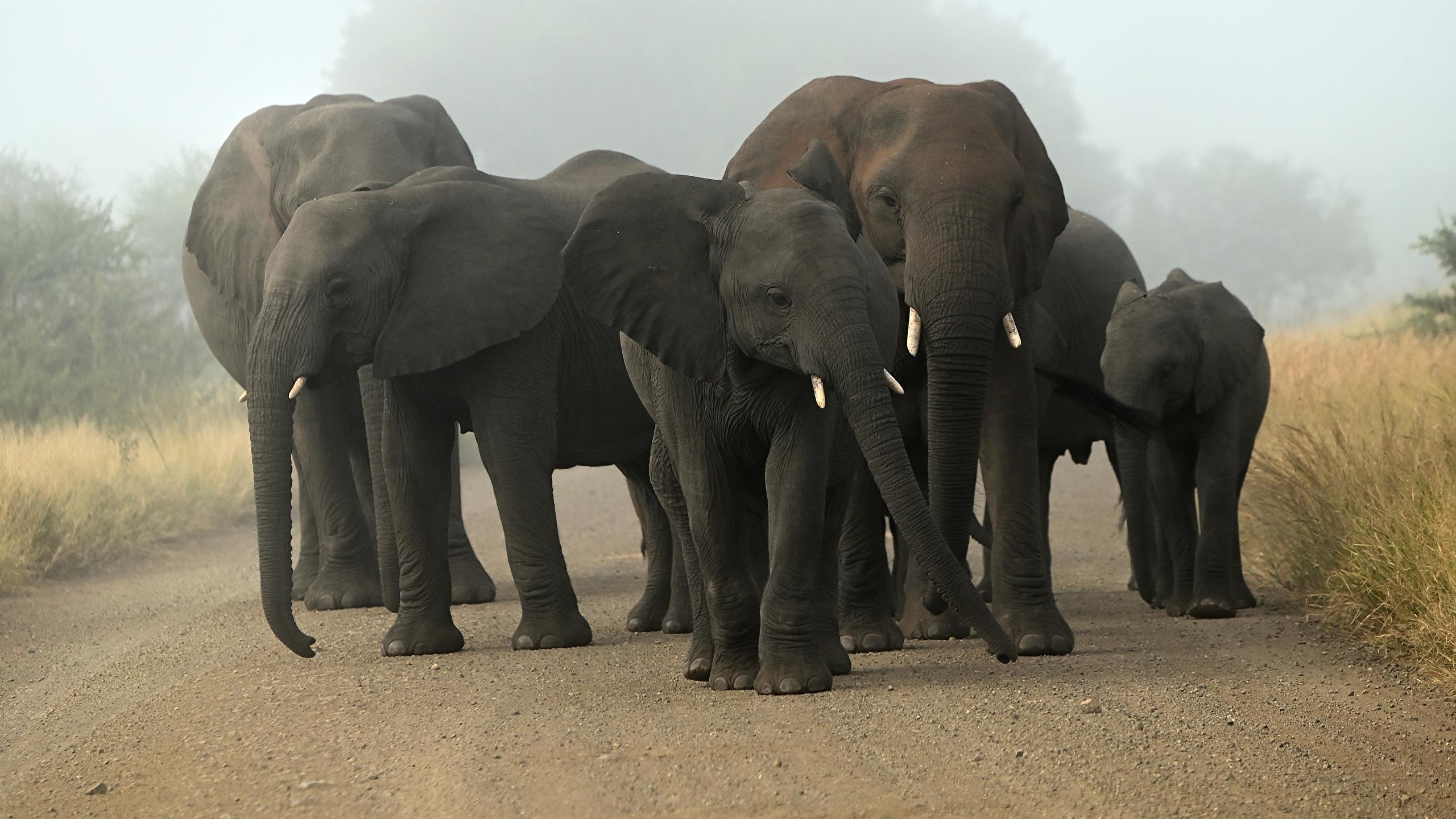 Fonds D Ecran 2560x1440 Elephant Petits Animaux Telecharger