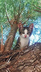 Fotos Hauskatze Katzenjunges Blick Baumstamm Untersicht Ansicht von unten