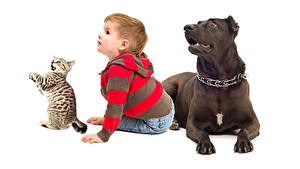 Wallpapers Dogs Cats Boys White background Glance Three 3 animal Children