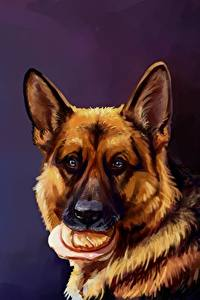 Fotos Hunde Gezeichnet Deutscher Schäferhund Butterbrot Shepherd Kopf