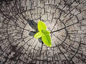 Hintergrundbilder Großansicht Baumstumpf Blatt