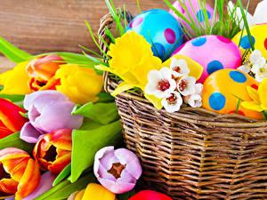 Fotos Feiertage Ostern Tulpen Narzissen Ei Weidenkorb Blumen