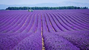 Fotos Frankreich Felder Lavendel Provence Natur