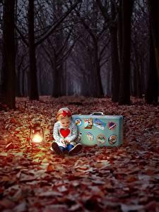 Fotos Herbst Wald Abend Blatt Kleine Mädchen Koffer