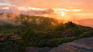 Bilder USA Park Sonnenaufgänge und Sonnenuntergänge Strauch Roan Mountain Rhododendron Gardens Natur