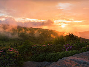 Pictures USA Parks Sunrises and sunsets Shrubs Roan Mountain Rhododendron Gardens Nature