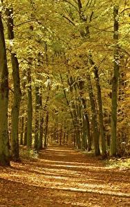 Fotos Herbst Wälder Bäume Blattwerk