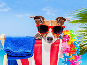 Fotos Hunde Handtuch Jack Russell Terrier Brille Schnauze ein Tier