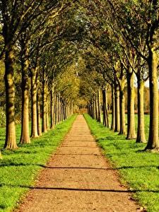 Fotos Straße Sommer Allee Gras Bäume