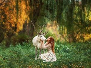 Bilder Hirsche Horn Unscharfer Hintergrund Weiß Anastasia Barmina junge frau Tiere