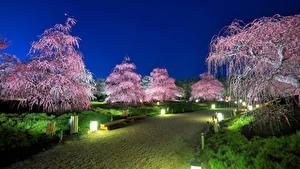 Hintergrundbilder Japan Präfektur Tokio Park Blühende Bäume Straßenlaterne Natur