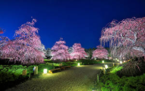 壁纸、、日本、東京都、公園、花の咲く木、街灯、自然