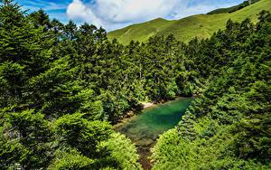 Sfondi desktop Cina Taiwan Foresta Lago Abete Natura