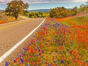 Hintergrundbilder USA Straße Lupinen Texas Natur