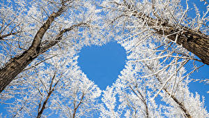 Fotos Winter Bäume Herz Schnee Ast Natur