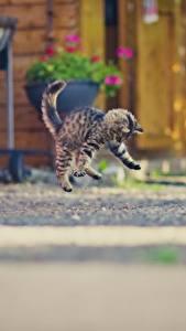 Fotos Hauskatze Katzenjunges Sprung ein Tier