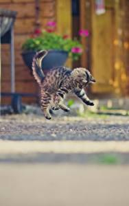 Fotos Hauskatze Katzenjunges Sprung
