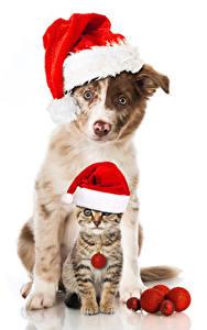 Hintergrundbilder Neujahr Hund Katze Weißer hintergrund Mütze Katzenjunges Zwei
