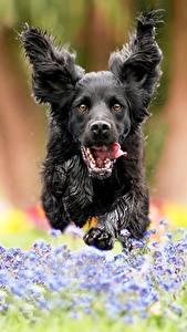 Hintergrundbilder Hund Laufsport Sprung Vorne Unscharfer Hintergrund ein Tier
