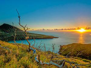 Fotos Sonnenaufgänge und Sonnenuntergänge Küste Landschaftsfotografie Hawaii Sonne Hügel Ast Gras