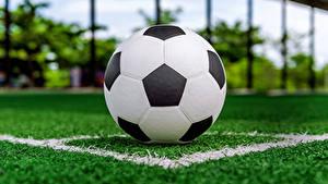Hintergrundbilder Fußball Rasen Ball Sport