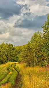 Hintergrundbilder Russland Wälder Wege Herbst Bäume Gras