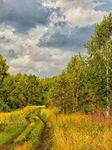 Hintergrundbilder Russland Wälder Wege Herbst Bäume Gras Natur