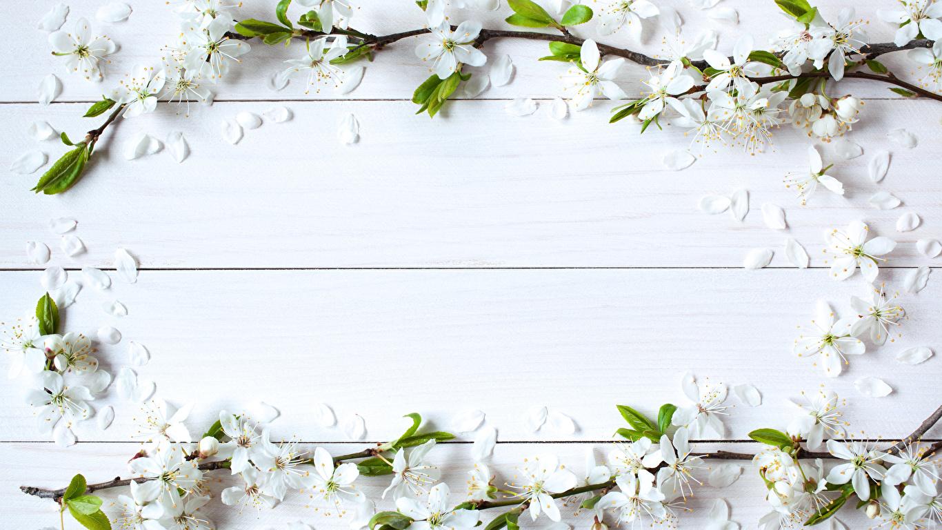 壁紙 1366x768 花の咲く木 木の板 テンプレートグリーティング