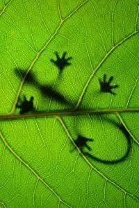 Bilder Nahaufnahme Echsen Blattwerk Silhouetten Tiere