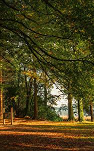 Fotos Irland Wälder Bäume Ast Castleblayney Monaghan