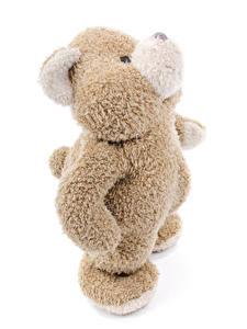 Bilder Teddybär Großansicht Weißer hintergrund