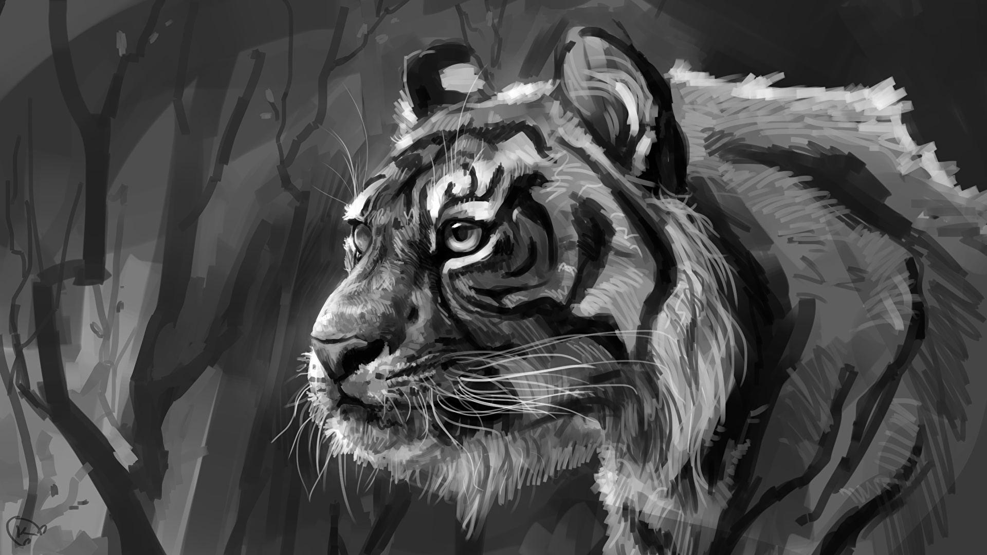 pictures tigers big cats black and white head animals 1920x1080