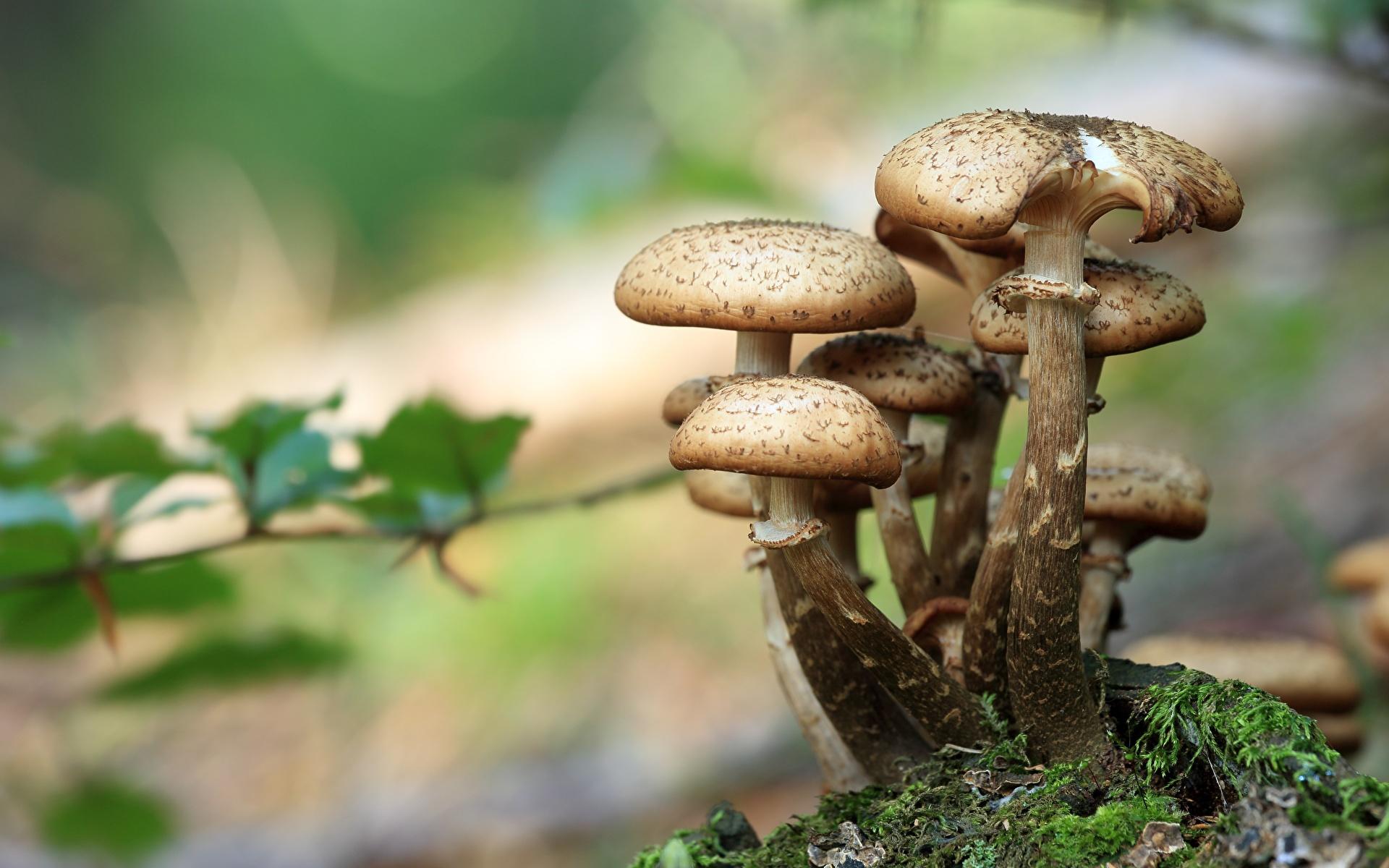 Bilder von Bokeh Natur Pilze Natur Großansicht 1920x1200 unscharfer Hintergrund hautnah Nahaufnahme
