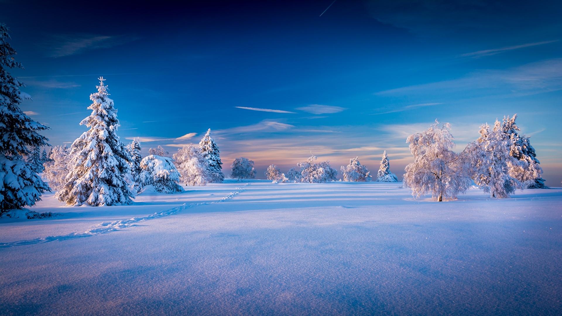 壁紙 1920x1080 冬 空 風景写真 雪 トウヒ属 木 自然
