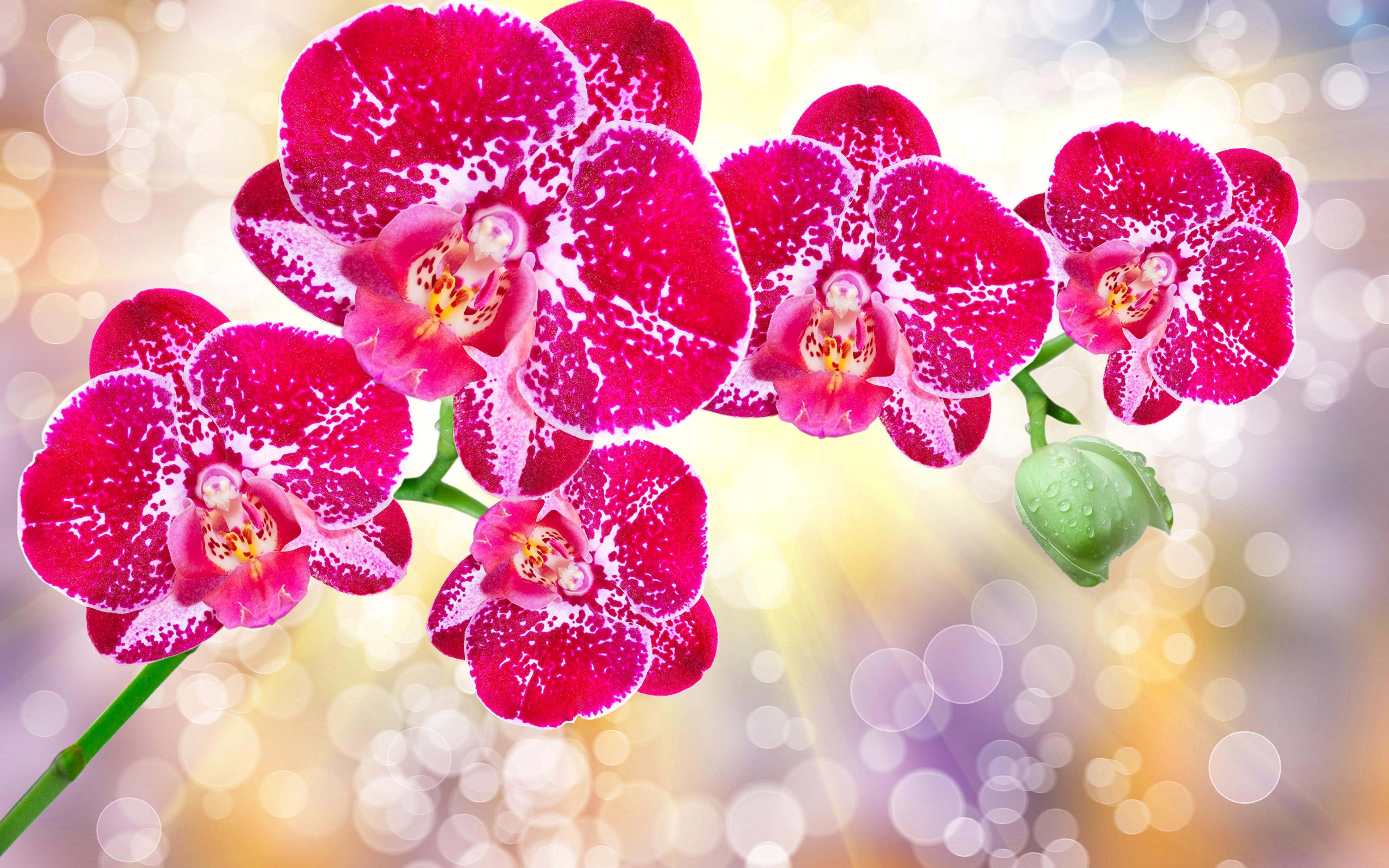 Fonds D Ecran 3840x2400 Orchidees En Gros Plan Rouge Fleurs