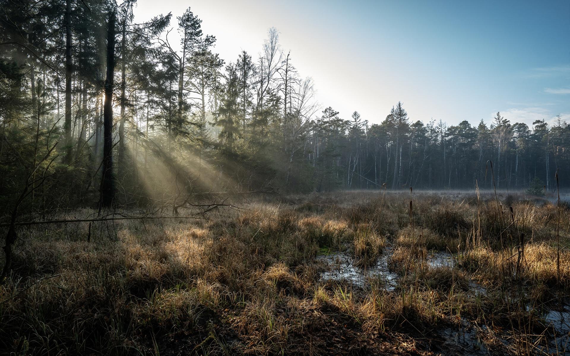 Fotos von Lichtstrahl Deutschland Grossdittmannsdorf, Saxony Natur Sumpf Wälder Bäume 1920x1200 Wald