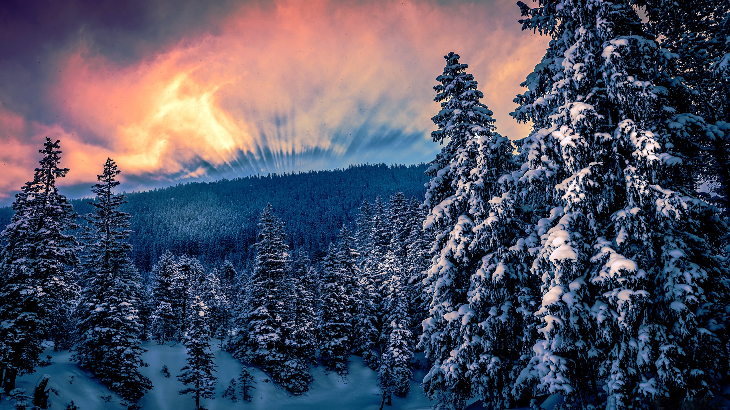 Wallpaper Winter Nature Snow Forests Trees 2560x1440