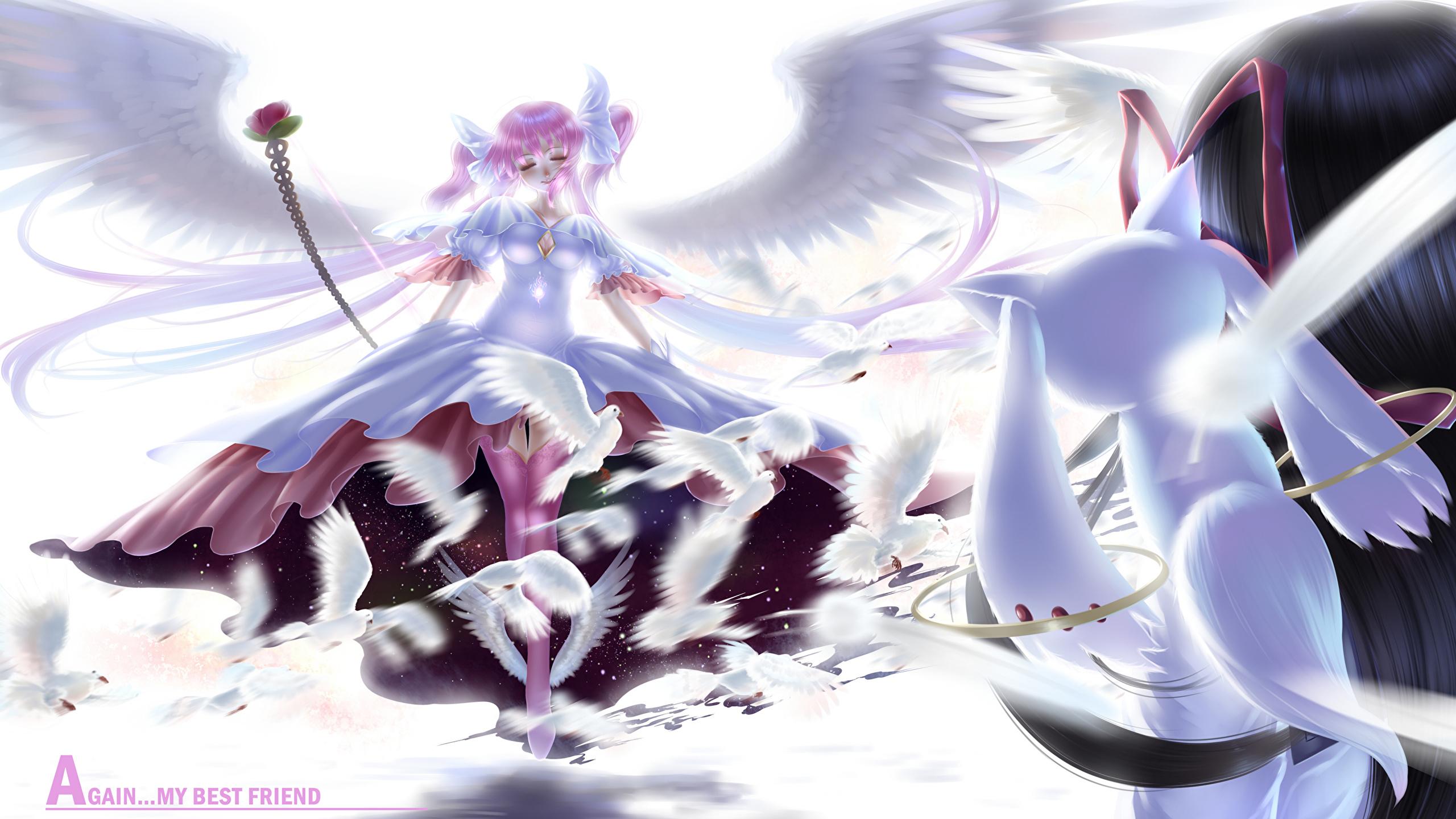 Wallpaper Mahou Shoujo Madoka Magica Anime 2560x1440