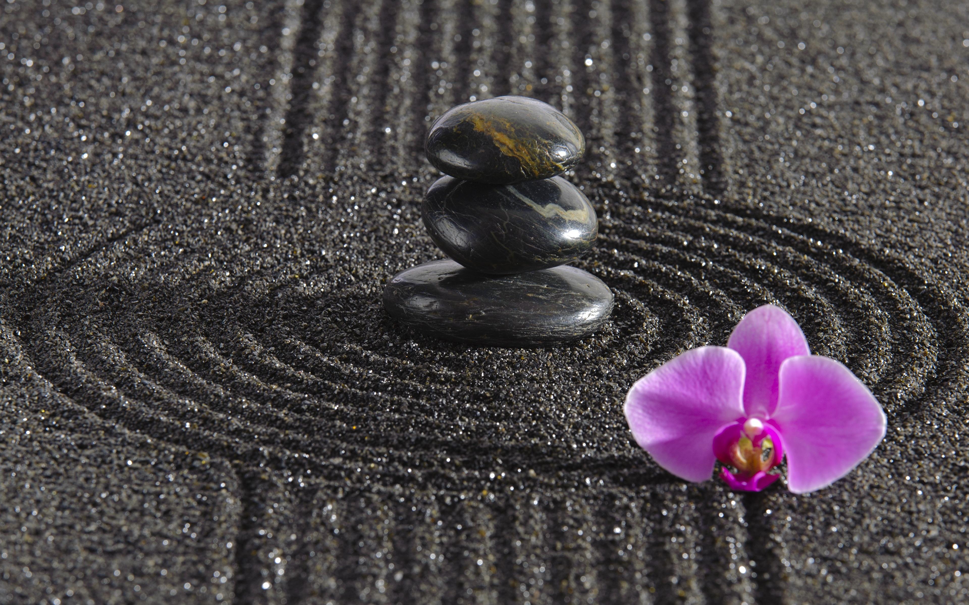 Fonds D Ecran 3840x2400 Pierres Orchidées Zen Cercles Nature